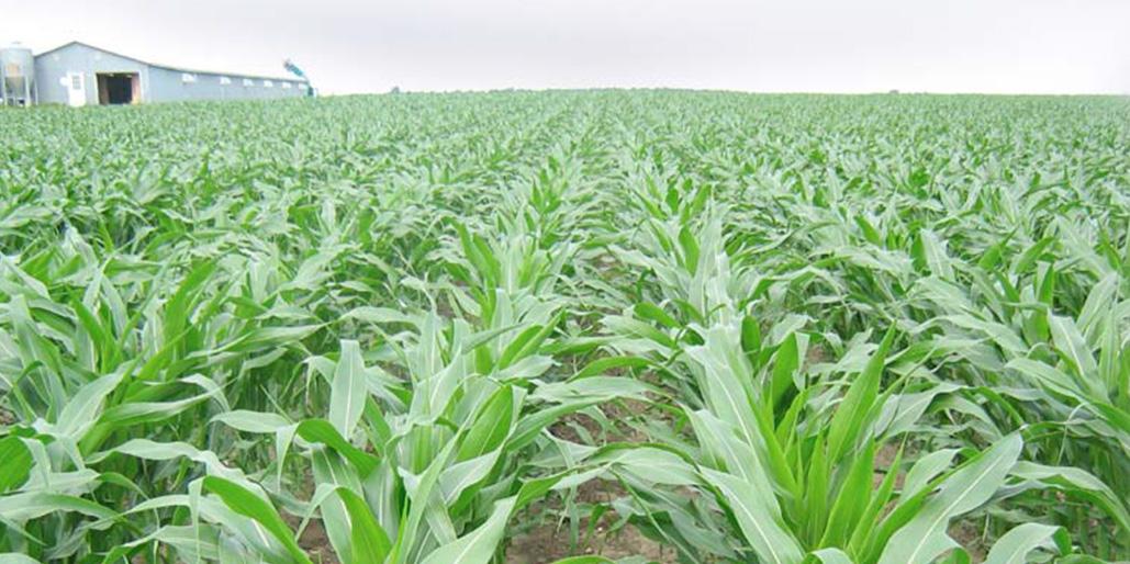 Équipe en productions végétales - agroenvironnement - Avantis Coopérative